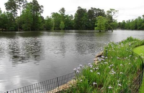 The Swan Lake Iris Gardens in Sumter, S.C., is a 120-acre public park that is home to all eight species of swans